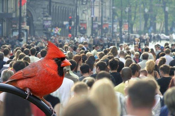 Får stadens buller oss att prata fortare?